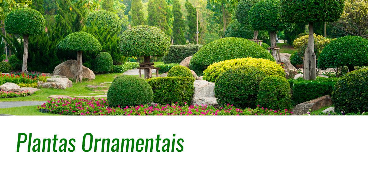 Árvores Ornamentais