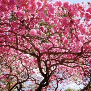 Ipê rosa